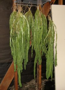 Drying weld plants